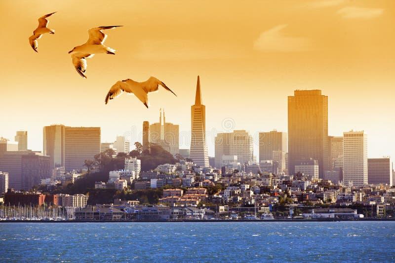 飞行在海湾的海鸥 免版税库存图片