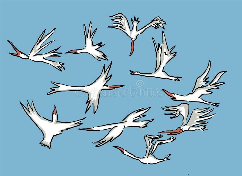 飞行在海的天空的鸟 库存例证