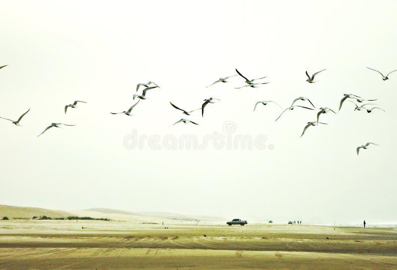 飞行在海滩的轻的天空的鸟 免版税库存图片