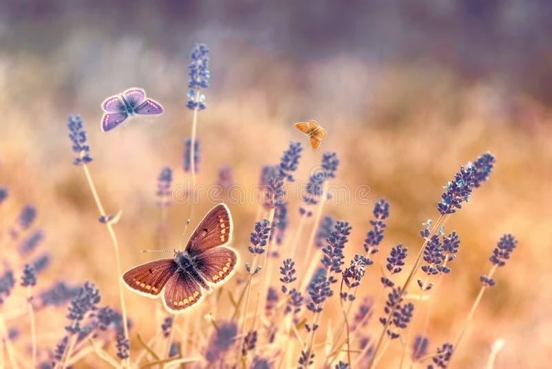 飞行在淡紫色,在淡紫色的蝴蝶的蝴蝶 免版税库存照片