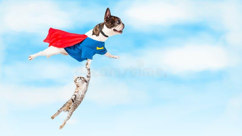 飞行在白色的特级英雄狗 库存照片