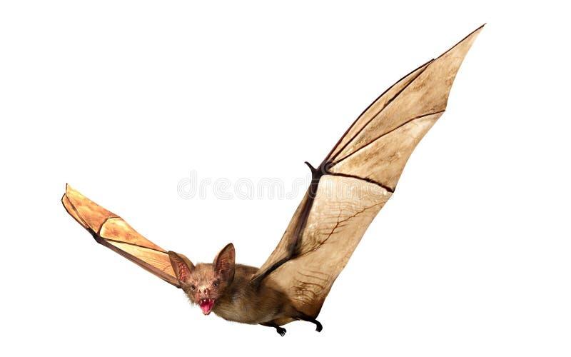 飞行在白色背景隔绝的吸血蝙蝠 库存例证