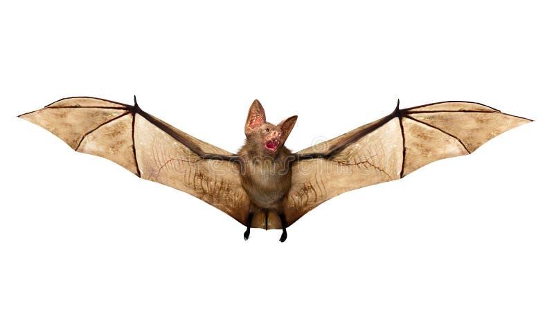 飞行在白色背景隔绝的吸血蝙蝠 库存照片