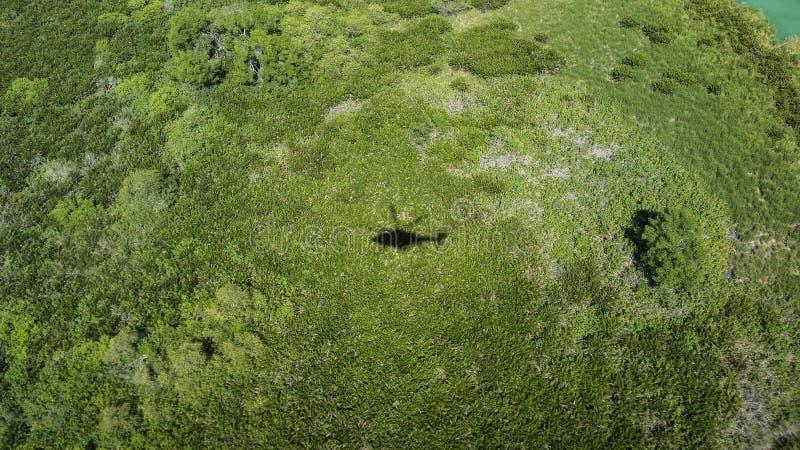 飞行在黄色草的直升机的阴影 库存图片