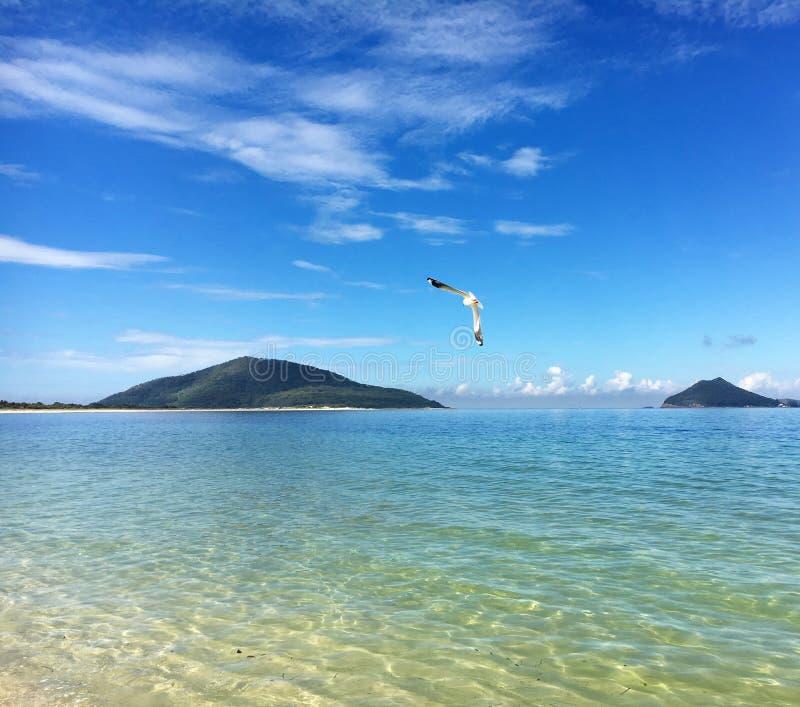 飞行在Jimmys海滩的海鸥在鹰筑巢 图库摄影