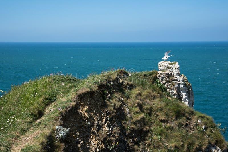 Download 飞行峭壁的海鸥 库存照片. 图片 包括有 峭壁, 海岸, 欧洲, 海岸线, 海鸥, 晒裂, 法国, 海洋 - 72369388