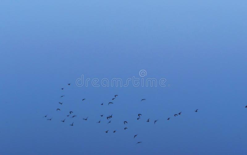 飞行形成的小组鸟反对蓝天 库存照片
