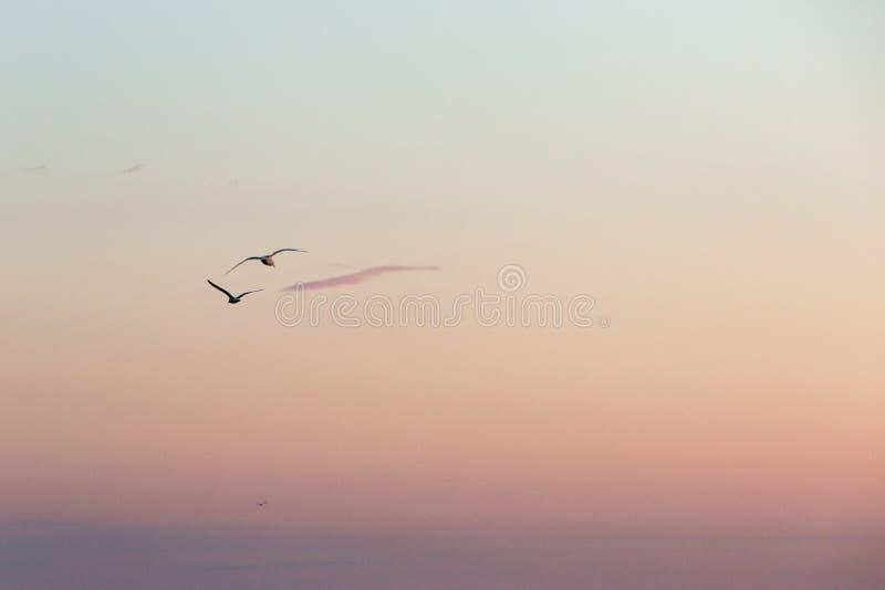 飞行日出日落五颜六色的天空的两只海鸥 库存图片