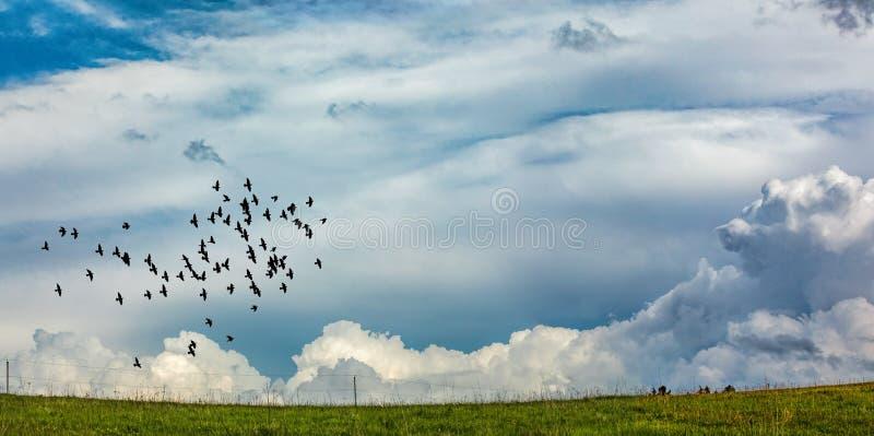 飞行横跨狡猾的鸟群  库存图片