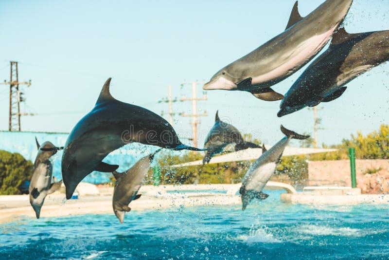 飞行海豚 库存图片
