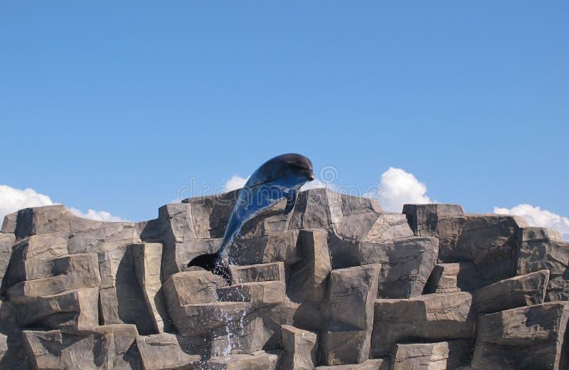 飞行海豚 图库摄影