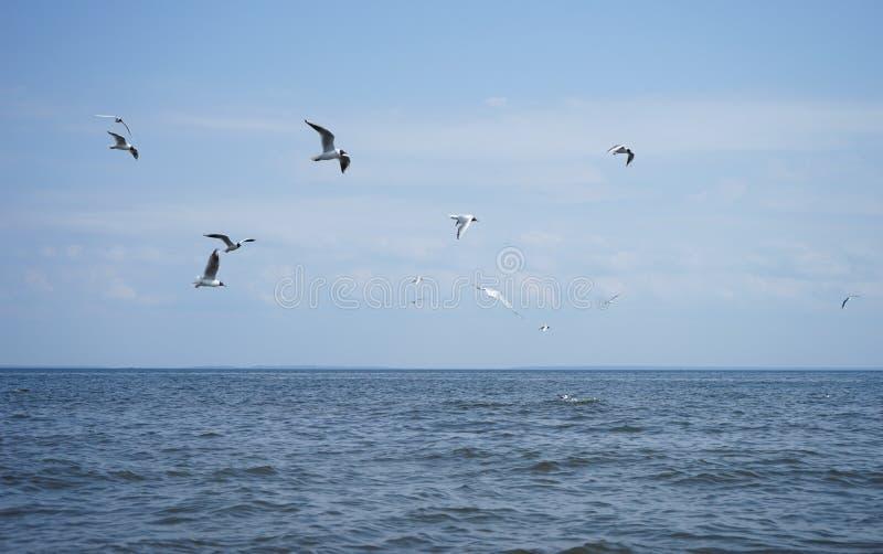 飞行海鸥腾飞 免版税图库摄影