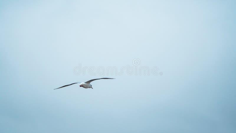 飞行滤网海鸥天空向量 免版税库存照片