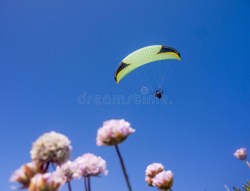 飞行的在飞行中滑翔伞在有些花 免版税库存图片