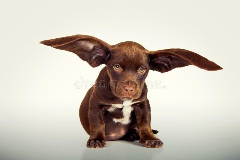 飞行的小狗 免版税图库摄影