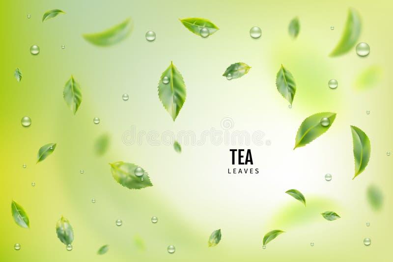 飞行的新鲜的绿色茶叶导航背景 皇族释放例证