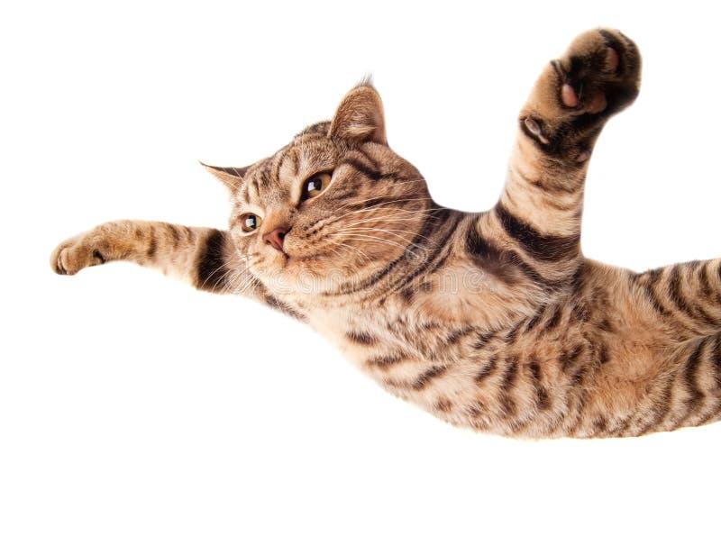 飞行的滑稽的小猫 库存图片