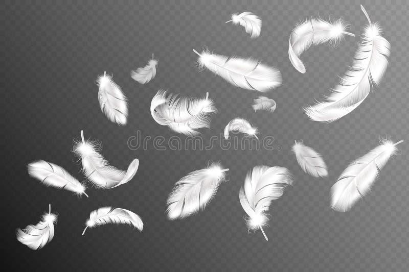 飞行的羽毛 落的旋转的蓬松现实白色天鹅、鸠或者天使翼用羽毛装饰流程,软的鸟全身羽毛 库存例证