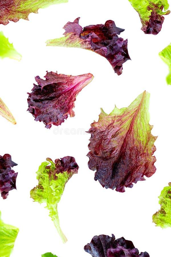 飞行的莴苣叶子隔绝了 新莴苣样式 巴达维亚沙拉 r 健康organiv食物概念 r 免版税库存图片