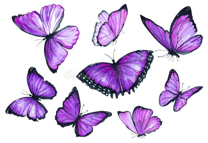 飞行紫色蝴蝶汇集水彩  免版税库存图片