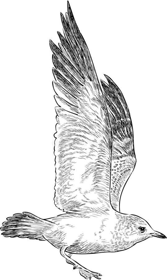 飞行纯海鸥天空的鸟 库存例证