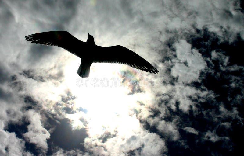 飞行自由 库存图片