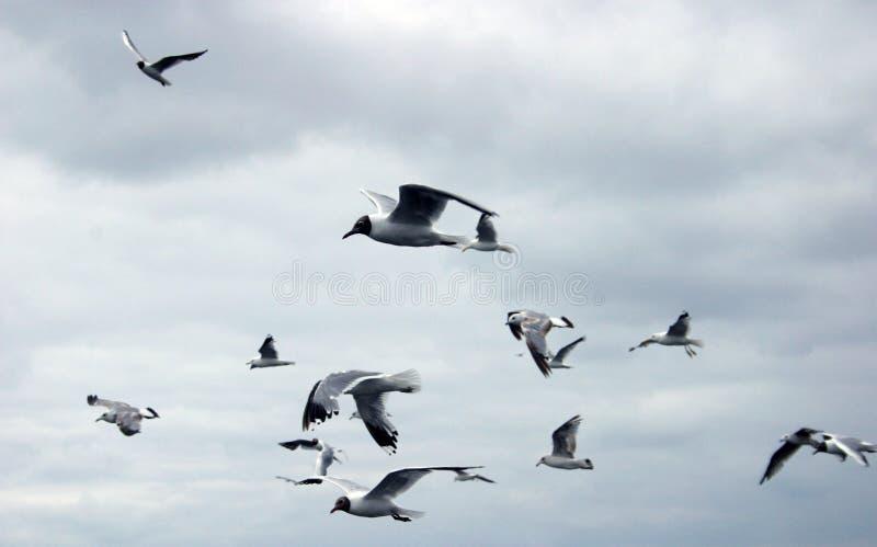 Download 飞行鸥 库存照片. 图片 包括有 灰色, 移动, hitchcock, 海洋, 双翼飞机, 遥远, 航空, 行间空格特别大 - 192292