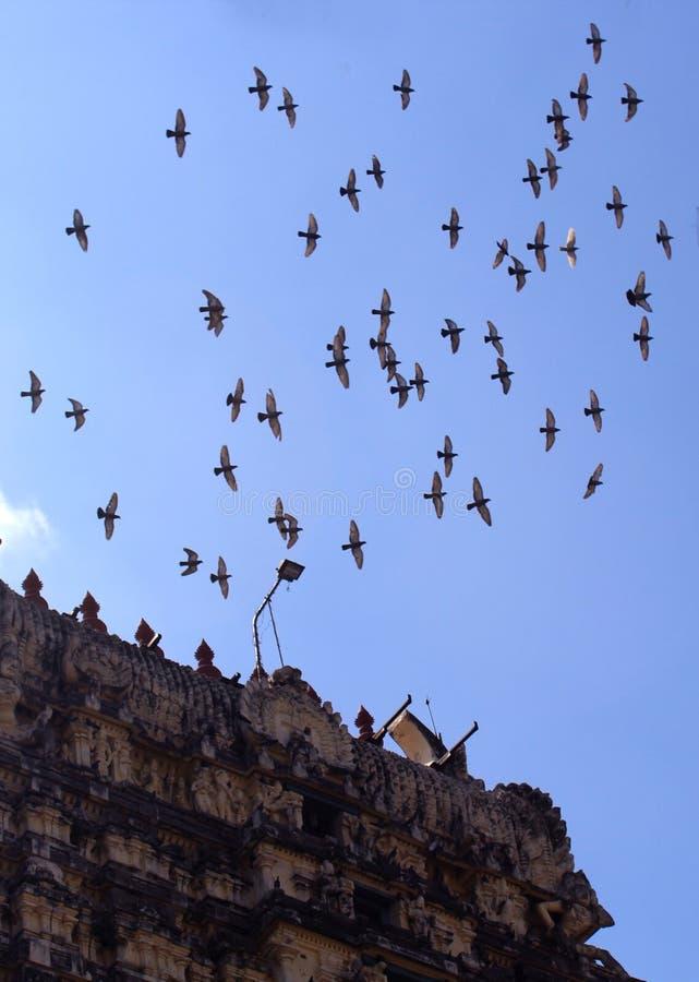 飞行鸽子与寺庙塔的鸟人群 库存照片