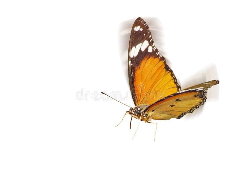 飞行蝴蝶 免版税库存图片