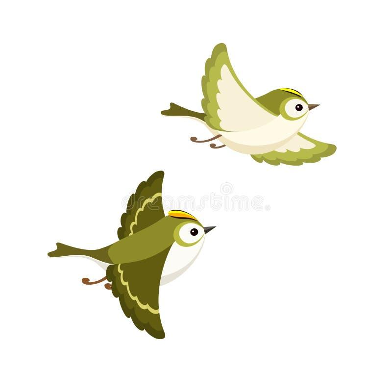 飞行Goldcrest对在白色背景隔绝的最小的欧洲鸟 库存例证