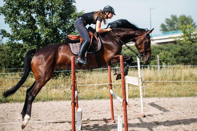 飞跃障碍的马的年轻女性骑师 库存图片