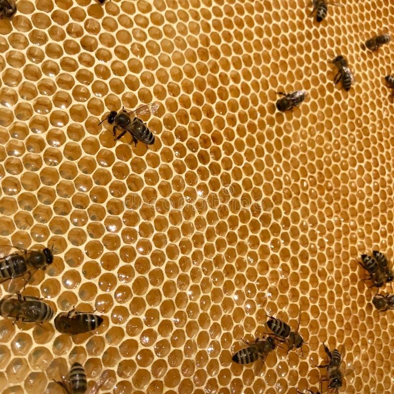 飞过的蜂慢慢地飞行到蜂窝从花收集蜂蜜的花蜜在私有蜂房 图库摄影