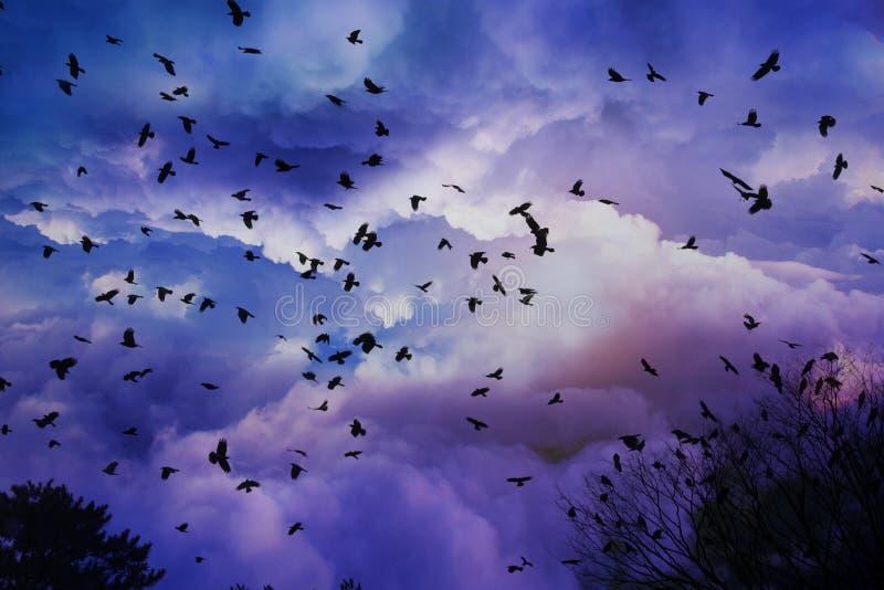 飞鸟剪影有美好的云彩和天空背景 图库摄影