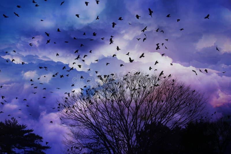 飞鸟剪影有美好的云彩和天空背景 免版税库存图片