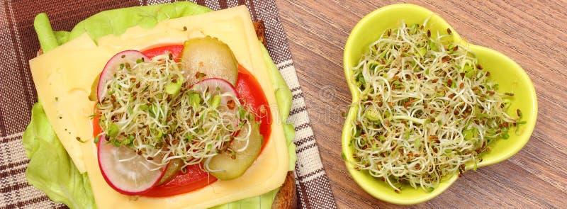Download 素食三明治和碗用紫花苜蓿和萝卜发芽 库存照片. 图片 包括有 健康, 新芽, 蕃茄, 干酪, 快餐, 膳食 - 59110980