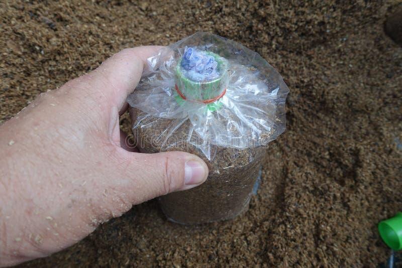 食物为被传染的蘑菇袋子做准备 免版税库存照片