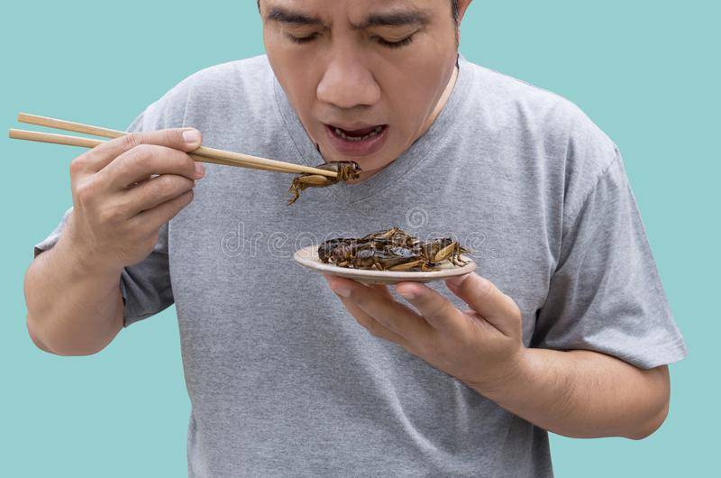 食物昆虫:在筷子的食人的蟋蟀昆虫 蟋蟀油炸了酥脆为吃当食物快餐,这是好来源  免版税库存图片