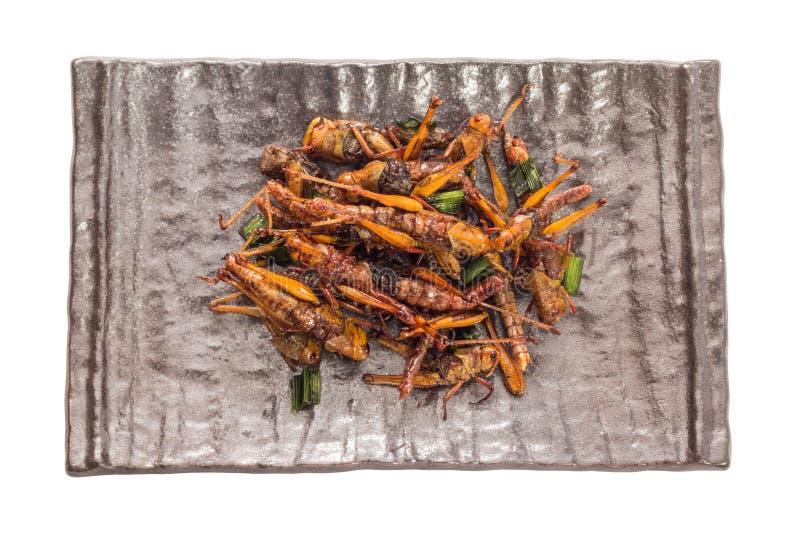 食物昆虫 库存照片