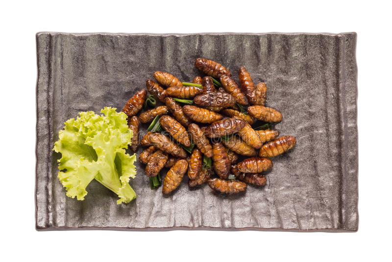 食物昆虫 免版税图库摄影