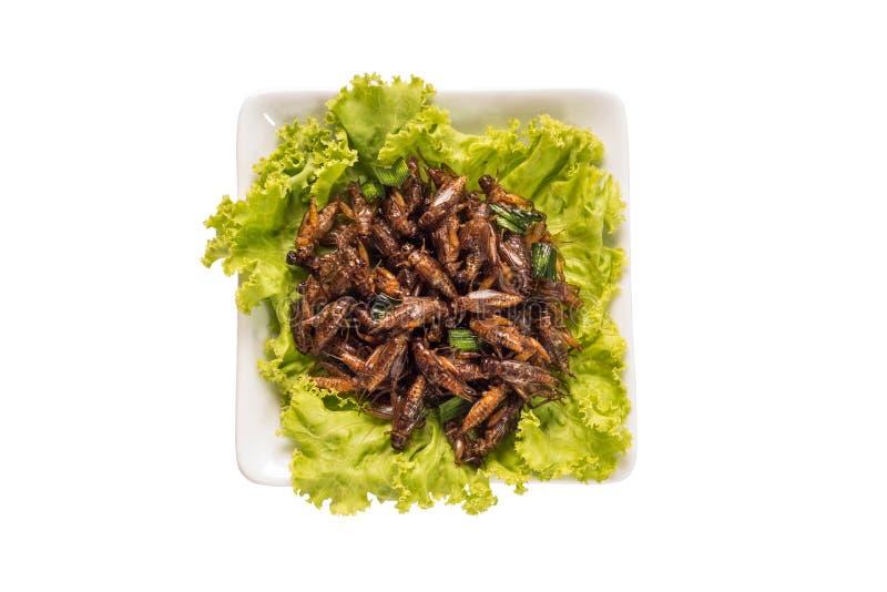 食物昆虫 库存图片