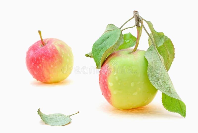 食物果子素食主义者 库存照片