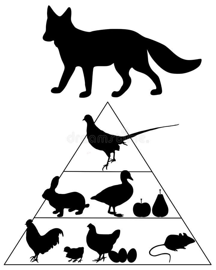 食物狐狸指南金字塔 库存例证