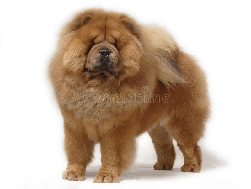 食物狗宠物 库存图片