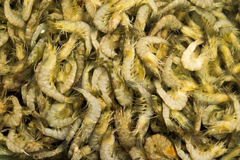 食物的大虾 免版税库存图片