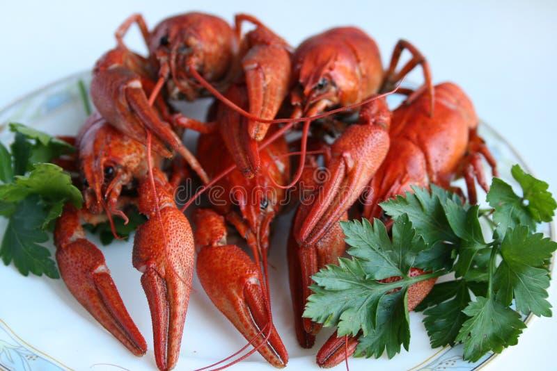 食物红海 库存照片