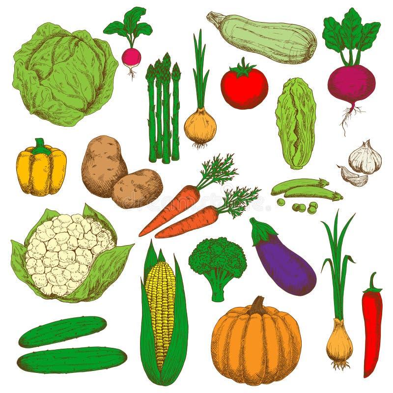 食物设计的减速火箭的色的速写的菜 库存例证