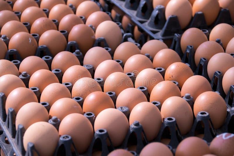 食物-在盘区包裹小组的鸡蛋在市场上 免版税图库摄影