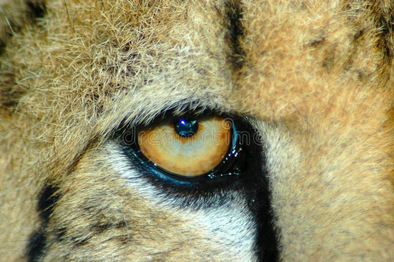 食肉动物的野生生物 免版税库存图片