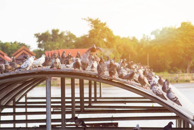 饥饿攻击的鸟 免版税库存照片