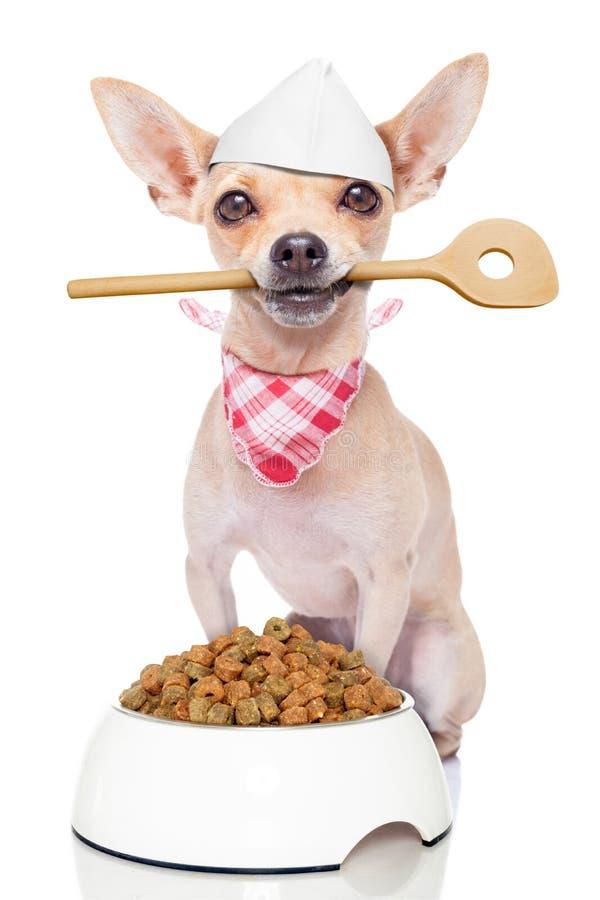 饥饿的厨师厨师狗 库存照片